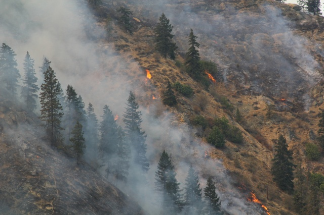 Photo of fire in Tripp Canyon, Photo taken by Mick Mueller Credit: USDA-Forest Service